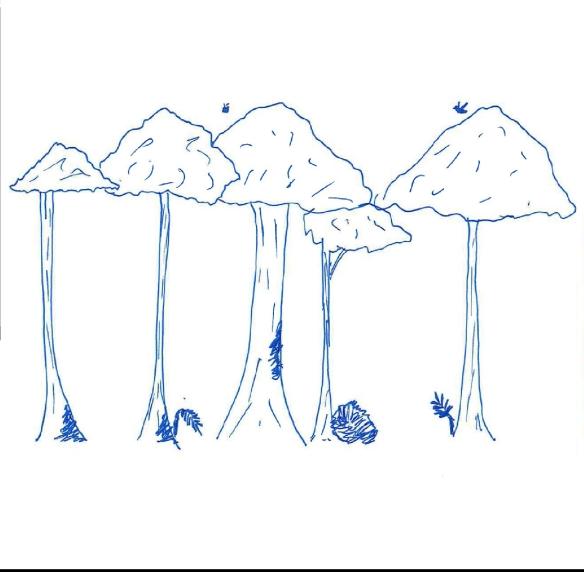 2ndry woodland